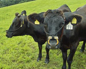 黒毛和牛.jpg